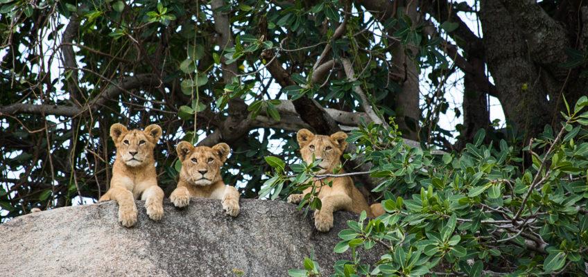 Safari-wedding in Tanzania
