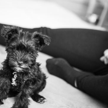 Meet Simcoe!